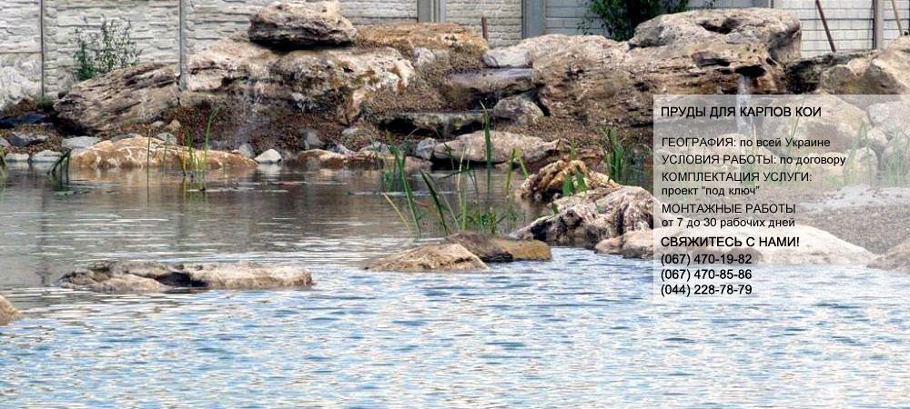 рыба искусственных водоемов, пруд рыба, рыба карпов, карпы кои +в пруду, кой карп