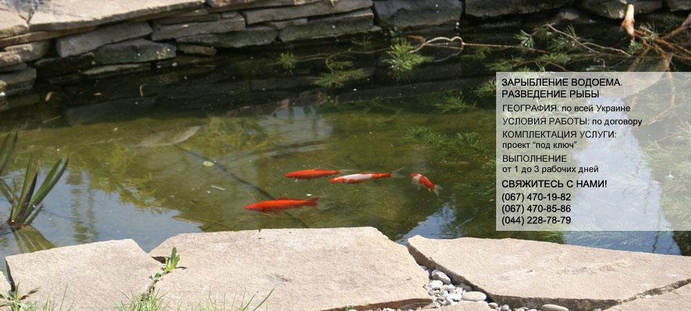 зарыбление водоемов, рыба разведение, карп зарыбление, бассейны +для разведения рыбы, разведение карпов