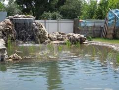 Плавательный био пруд с водопадом. Бортничи (Киевская обл.)
